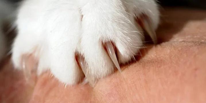 Jaga kesehatan kuku kucing